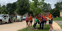 Grants Of $500 To $3,000 Available To Plant Trees In Illinois Communities